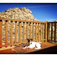 jan16the-mose-dog-soakin-up-the-sun