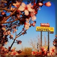 feb19cherry-blossoms-in-the-hi-desert-confound-me
