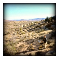 feb8today-jon-showed-me-one-of-the-weekday-treks-he-likes-to-take-the-pups-on-and-photograph-along