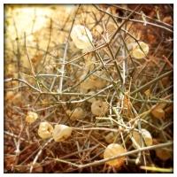 march2paperbag-bush