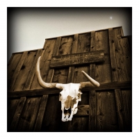 may7bull-head-skull-and-the-moon
