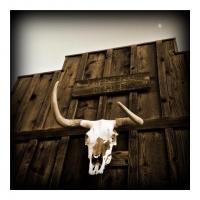may7bull-head-skull-and-the-moon
